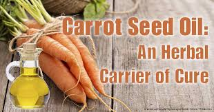 Carrot Seed Oil Benefits For Your Skin